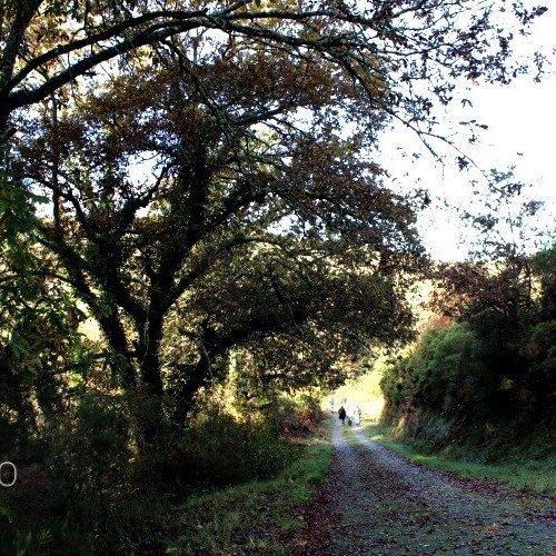 Lalín, algo más que el Camino de Invierno