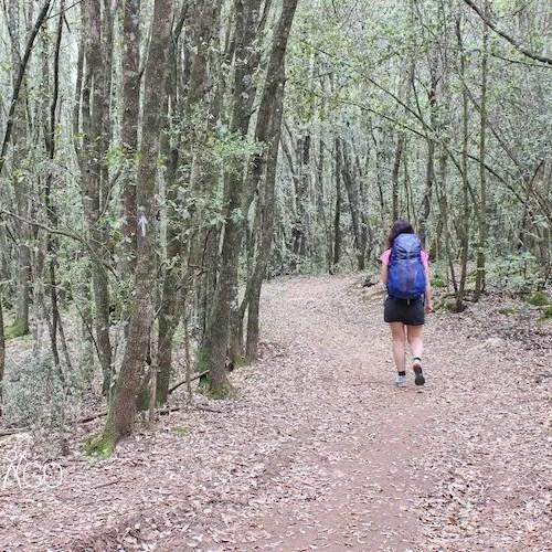 Reconstruir el Camino de Santiago tras la Covid-19