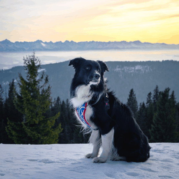 Top Dog in Exporting