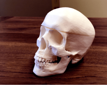 Prop skull designed by MacGyver