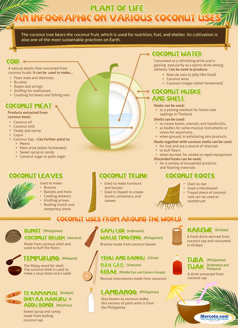 coconut-uses-highres