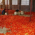 Tomatoes warehouse East Africa