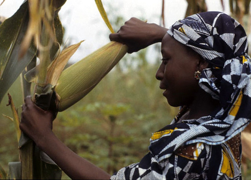 Empowering women farmers can help relieve global hunger