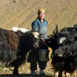 Woman herder in Mongolia