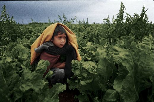 U.S. Labor Department limits child farmworker protection as dangers persist