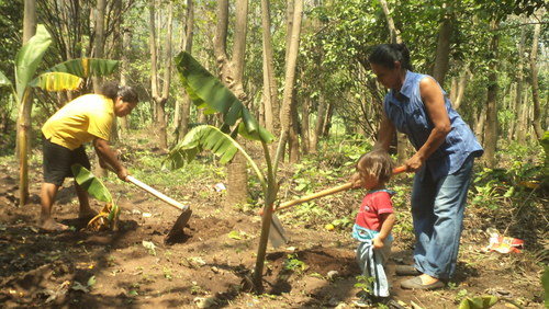 Energy Forests, the Feminine Art of Reforesting