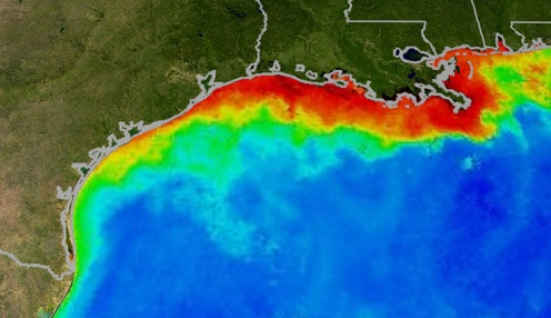 "Ocean ""dead zones"" are leading to marine life death, say scientists"