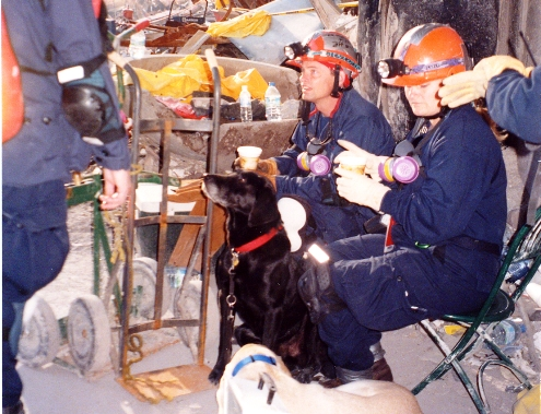 The dogs who worked for rescue at 9/11's Ground Zero