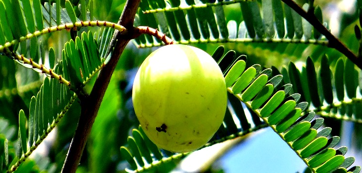 Image result for amla for skin