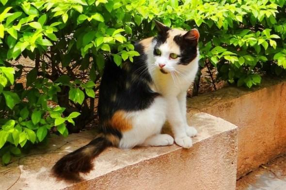 cat-173348_1280