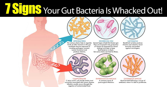 gut-bacteria-1