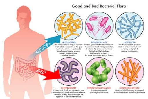 gut-health-good-bad