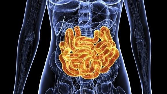 female intestine