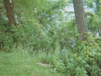 Zona Gale house shoreline overgrowth