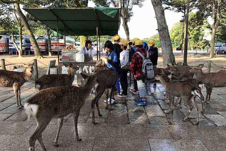 【關西自由行】半日遊。晨起「奈良公園」餵暴走小鹿,再逛逛國寶級建築物,東大寺、春日大社、興福寺
