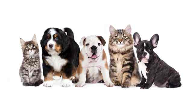 What Is The Best Way To Budget For A New Pet?