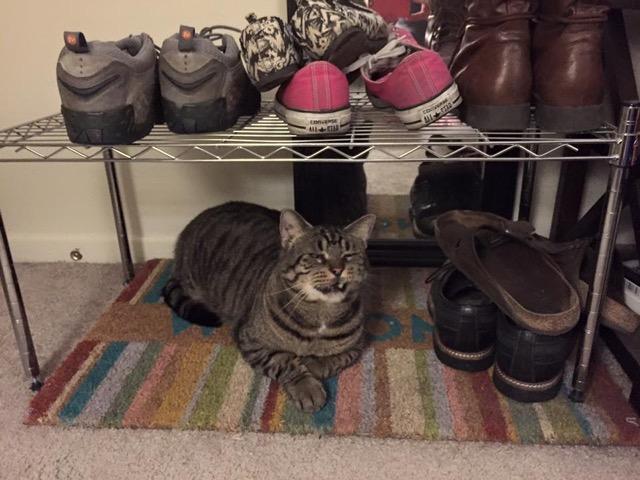 Julius - Cheyenne Wall-Grimes' cat