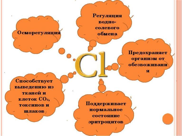 Хлорид в организме человека