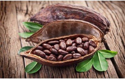 какао польза для здоровья