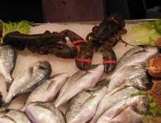 Venedig 28 Venedig Fischmarkt Krebs und Fisch