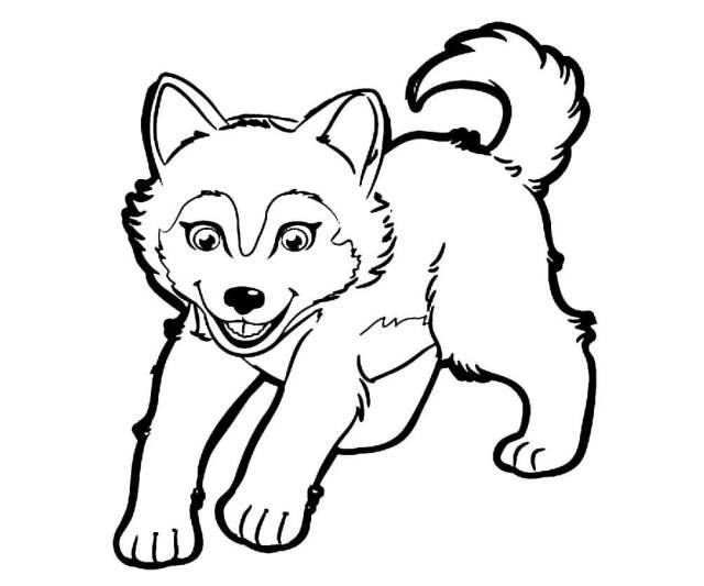 Husky Coloring Pages. Print for Free  WONDER DAY — Coloring pages