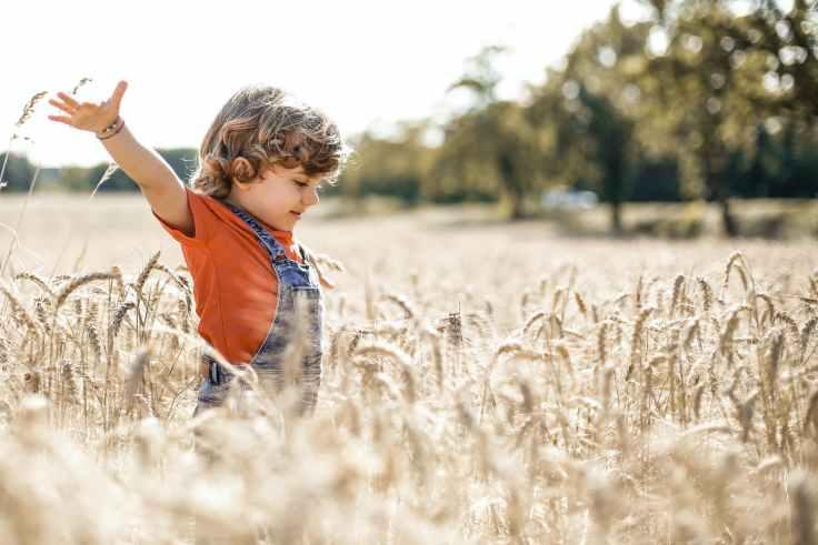 little boy in wheat field