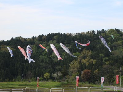 Flying Koinobori