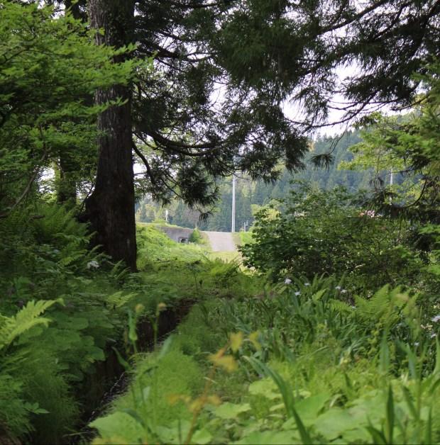 Green riverwalk