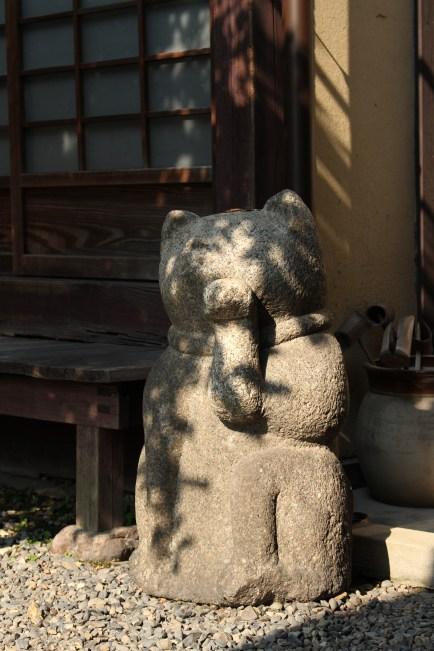 Kanjiro Kawai's cat