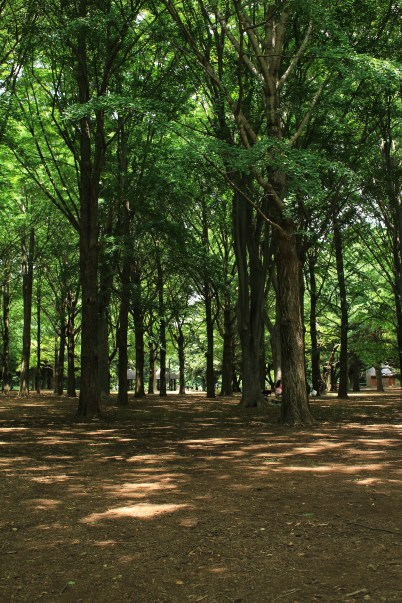 Forest area in Yoyogi Park