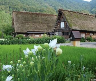 Shirakawago area's Gassho- style house