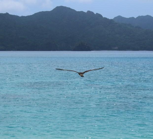 Flying waterfowl