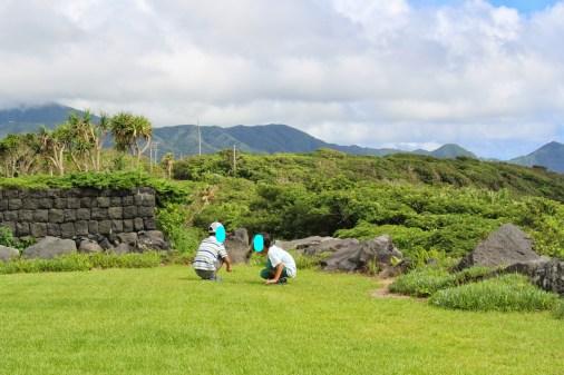 Wide garden with Kiwi trees