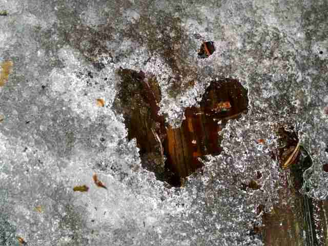 February Nature Day by Day Calendar: Heart Scavenger Hunt