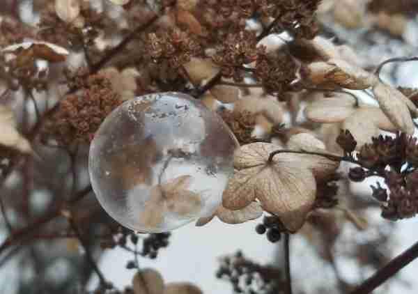 winter-nature-frozen-bubbles