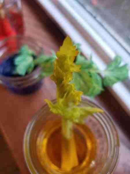 Celery food dye experiment