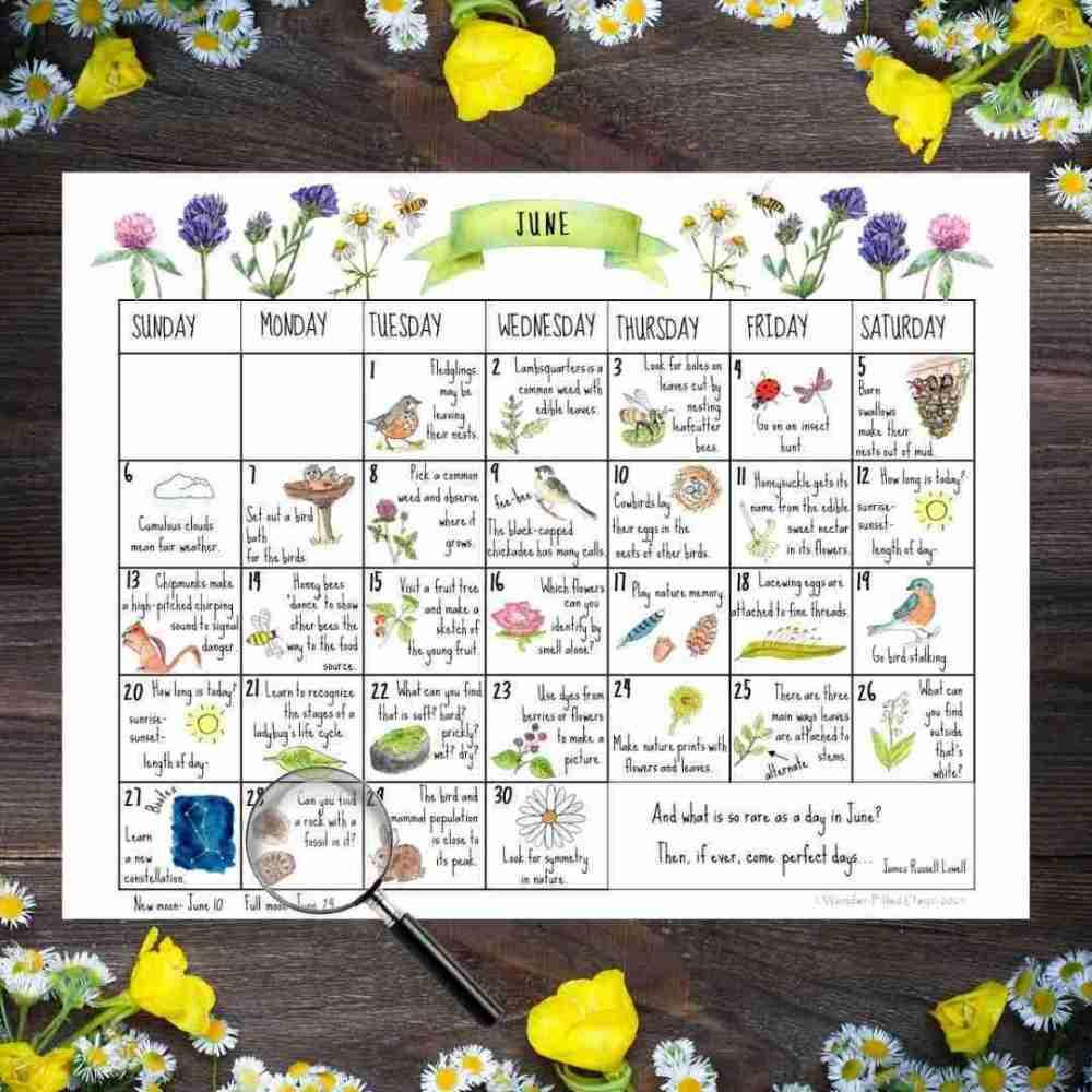June Nature Calendar