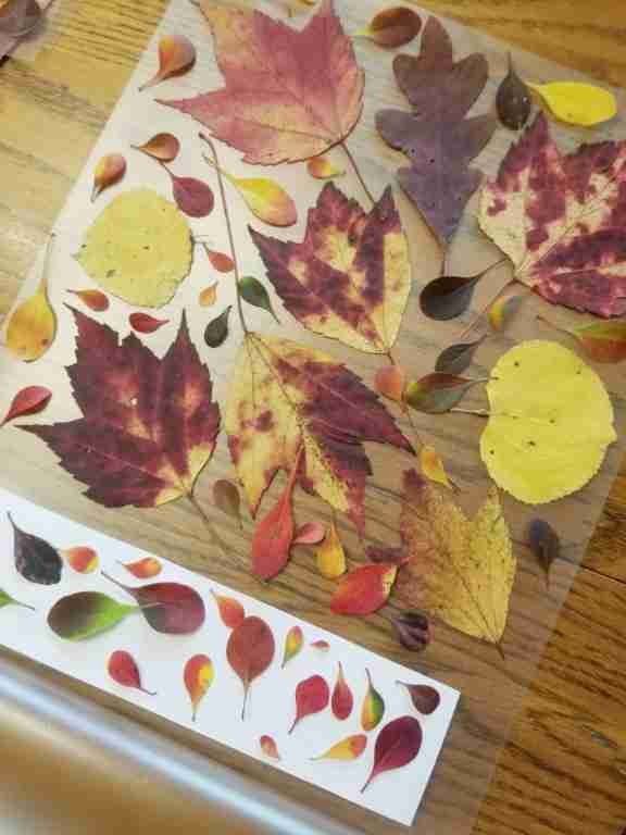 Making-Pressed-Fall-Leaf-Bookmarks