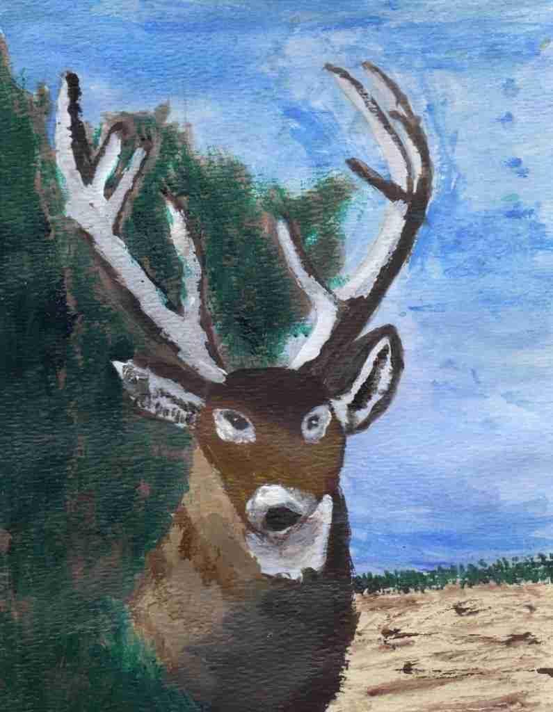 Whitetail-Buck