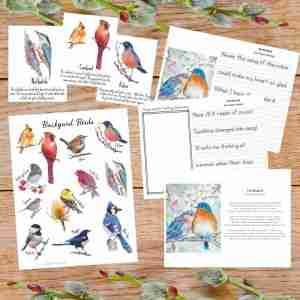 Bird Study Poster Flashcards
