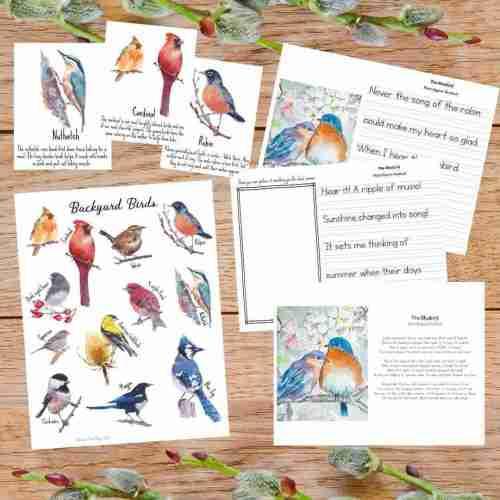 Bird Study Poster Flashcards