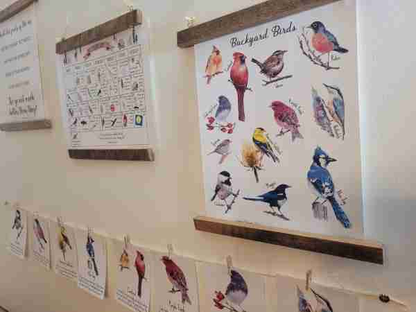 Bird Study Posters Flashcards Copywork