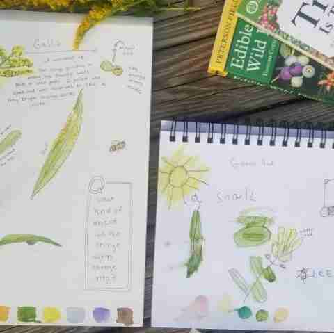 Goldenrod Fall Nature Study