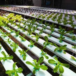 vegetales variados en una granja de cultivo hidropónico