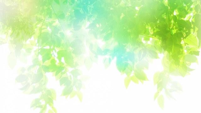 新緑640
