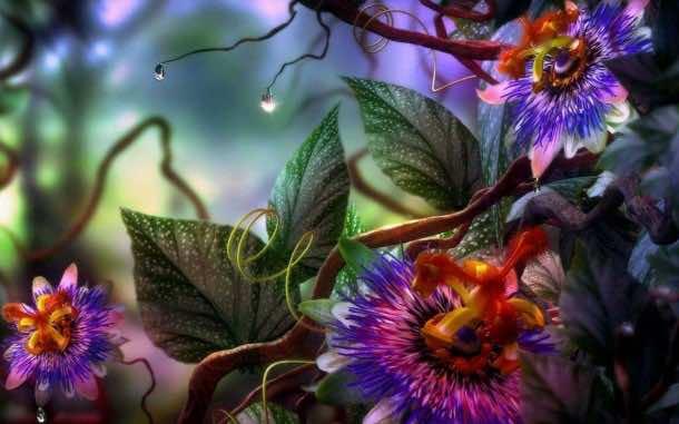 flower wallpaper 25