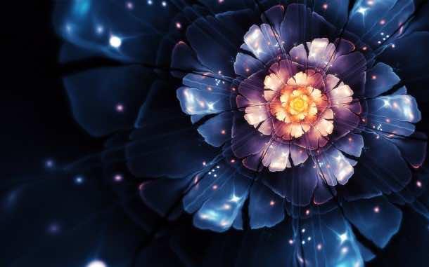 flower wallpaper 3