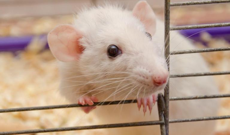 Scientists Just Cured Diabetes In Mice