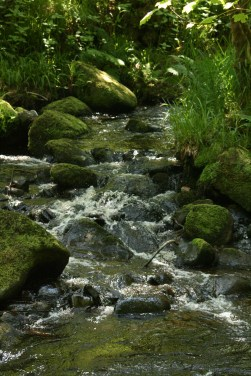 The stream flowing into the river
