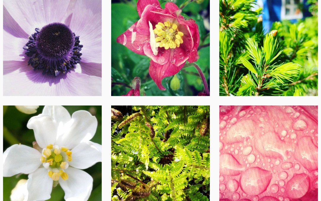 selection of freelance journalist Alice Whitehead's images